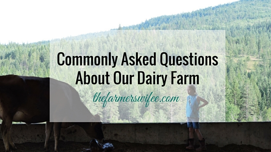 Commonly Asked Questions About Our Dairy Farm