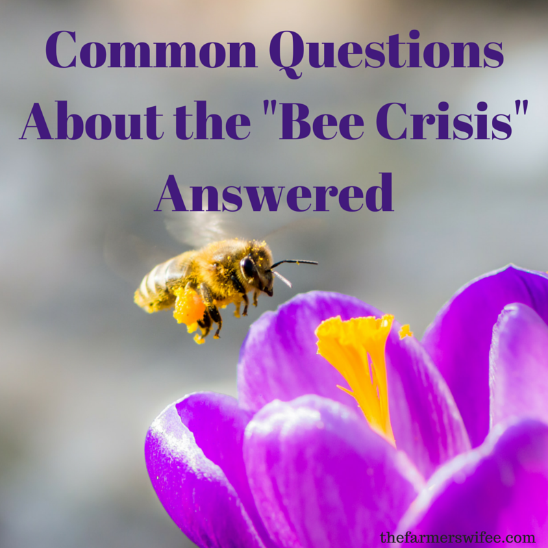 "Common Questions About the ""Bee Crisis"" Answered"