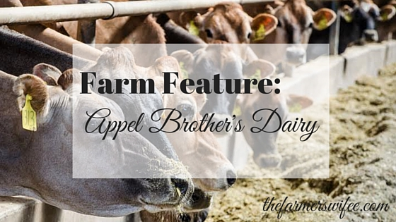 Farm Feature: Apple Brother's Dairy